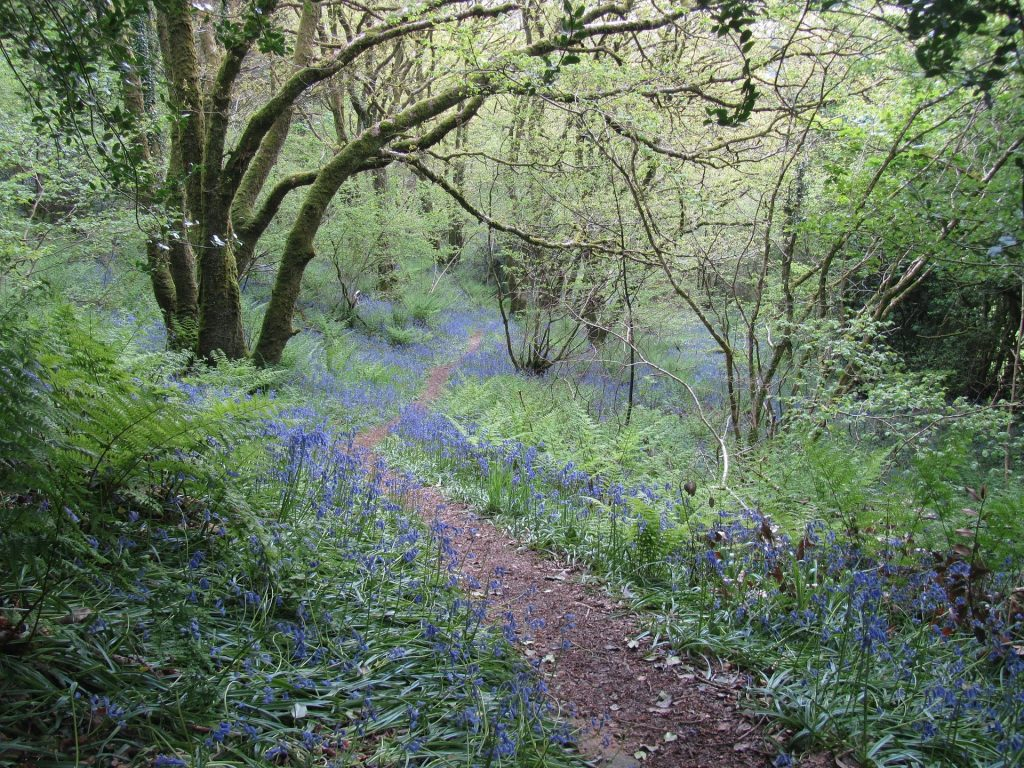 Wales Footpath During the Spring
